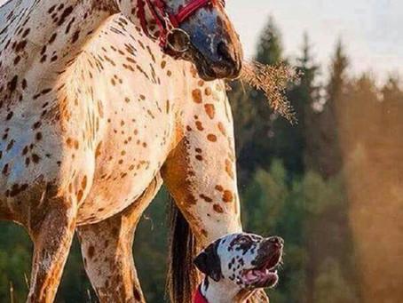 Если 3 человека сказали вам, что вы лошадь, пора покупать сбрую (из анекдота).