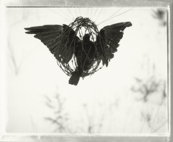 FREEDOM, silver gelatin print