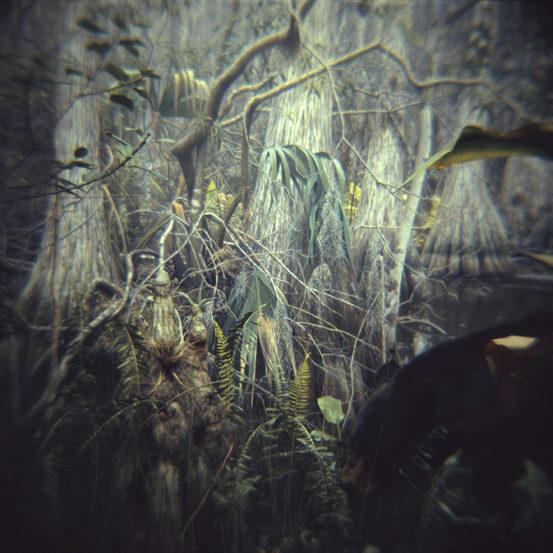BLACK BEAR, CYPRESS SWAMP, c print 2006