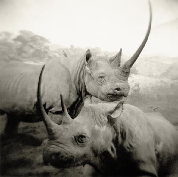 black rhinoseros.web.jpg