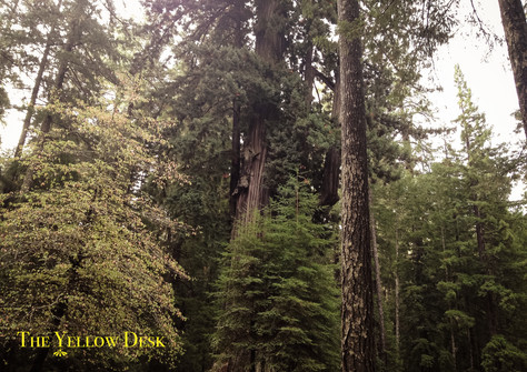 If the Redwood Forest Could Speak
