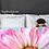 Pink Petals Duvet Cover bedroom mock up