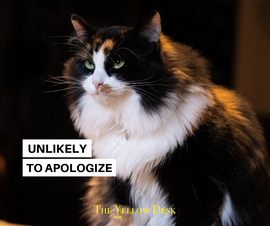 YellowFunniesUnapologeticCat.png