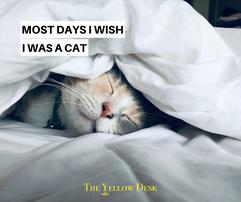 YellowFunniesWishIwasaCat.png