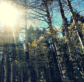 OregonPhotobyBradleyMorris.jpg