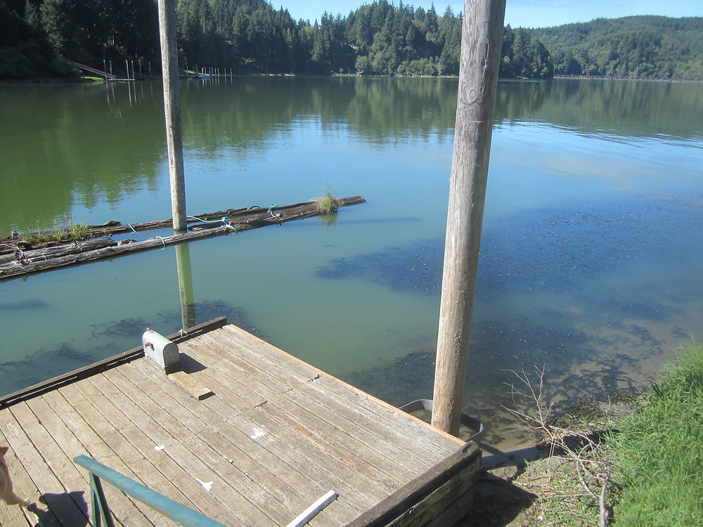 Weed barrier (note 10x10 foot weedless section next to dock). Photo courtesy of Debbie Newman.