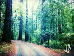 RedwoodForest1_edited.jpg