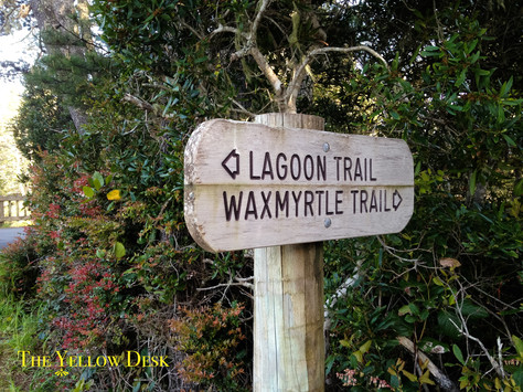 A Brief but Magical Hike Around the Siltcoos Lagoon