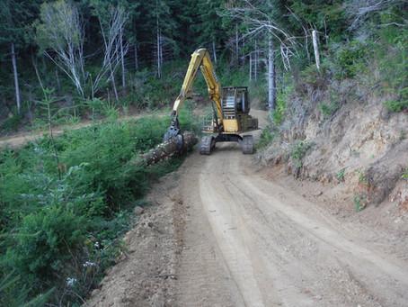 Creek Restoration Update 8.13.20