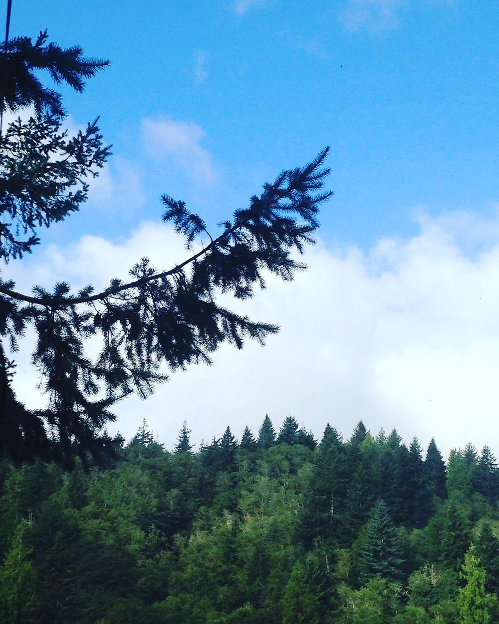 Forest at Tenmile Lake, Lakeside, Oregon - Oregon Coast. Photo courtesy of The Yellow Desk.