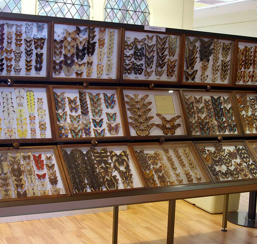 Exposition de papillons