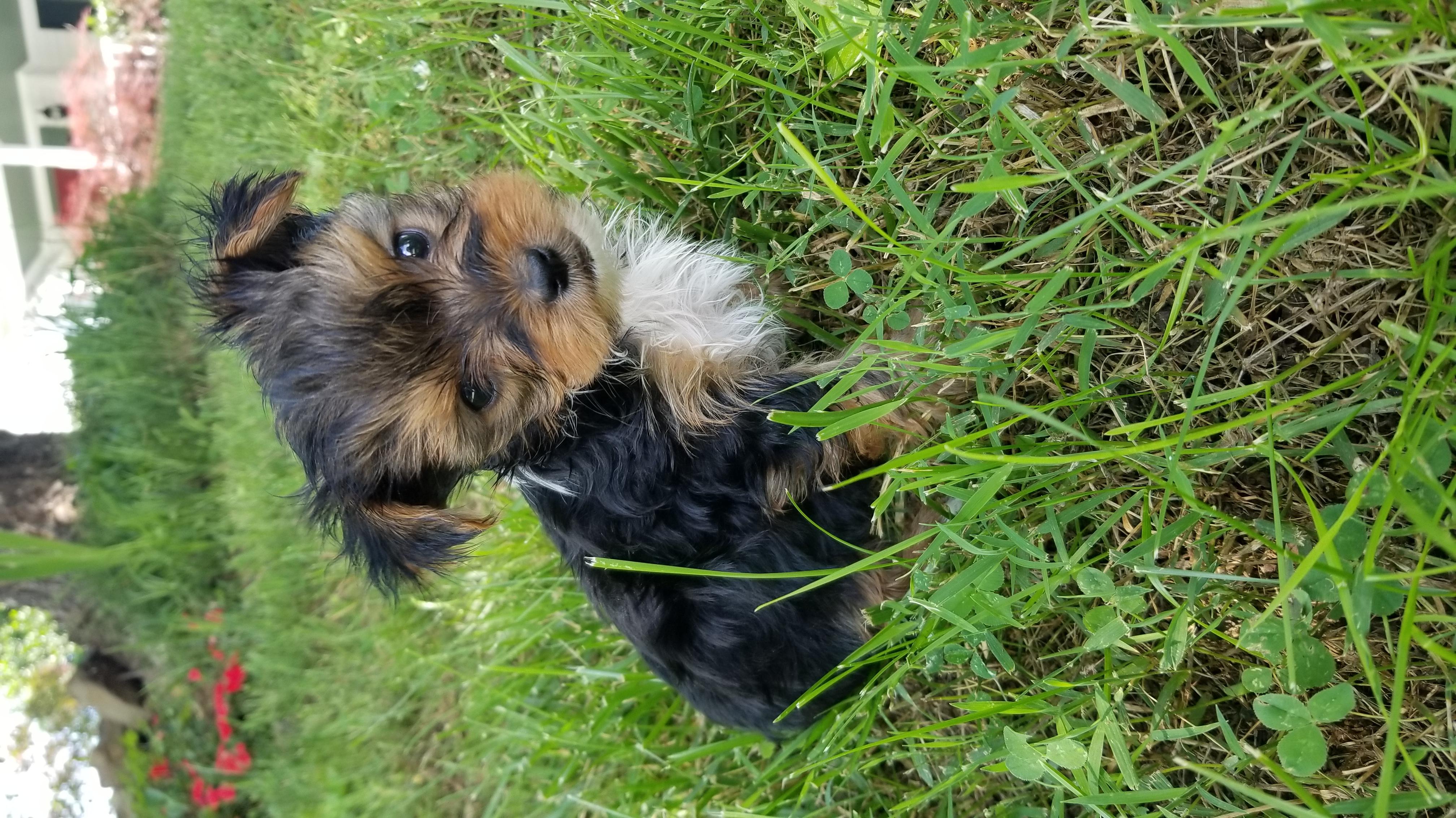Holztiger Small Farm Dog |Small Dogs Farm