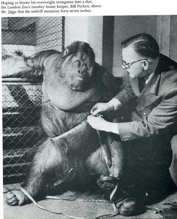 2_Orangután.jpeg