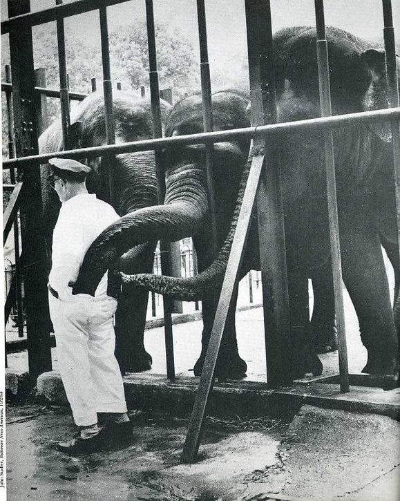 5 Elefantes.jpeg