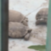 10 Tortugas.png