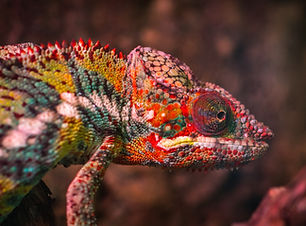 animal-biology-blurred-background-751682