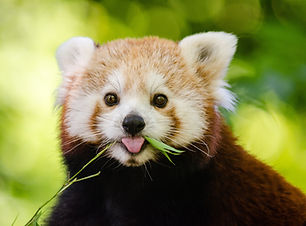 adorable-animal-close-up-148182.jpg