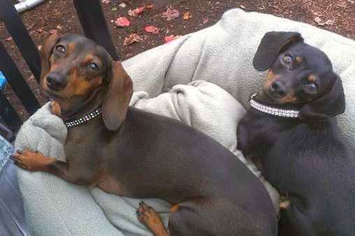 Heidi and Mocha, two dogs