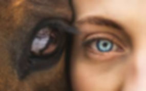 horse eye.jpg