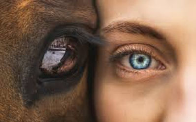 horse and human eyes face to face looking forward