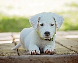 adorable-animal-canine-257540.jpg