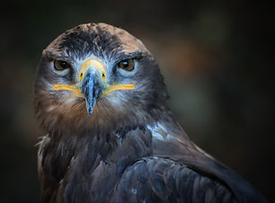animal-bird-close-up-33392.jpg
