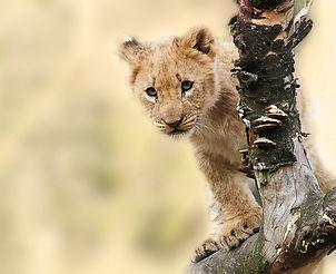 lion-565820_1280.jpg