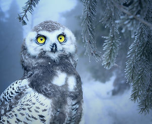 owl-3184032_1280.jpg