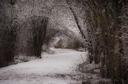 canopy of snow