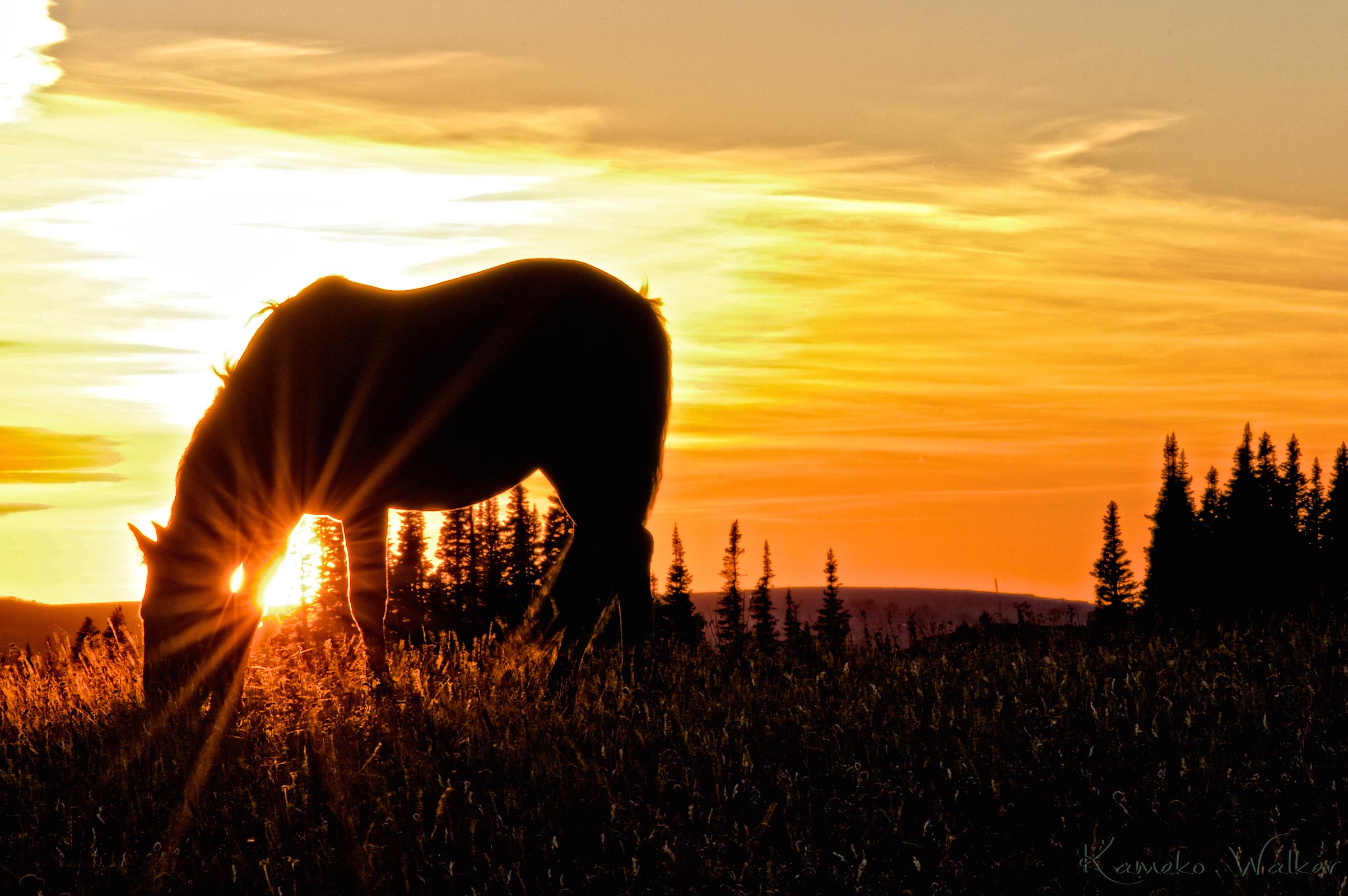 Mustang Sunset