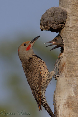 Family of Flickers