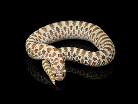 Sandworm I