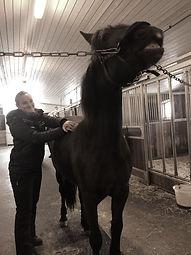 massasje_hest%2C_tonje_mor%C3%B8nning_ed