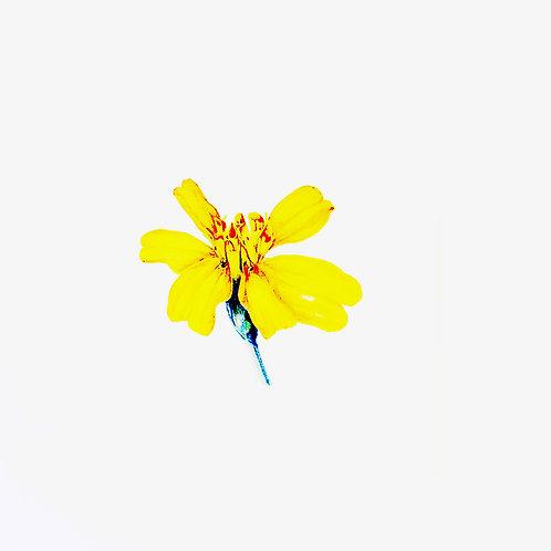 Karte Blumen gelb