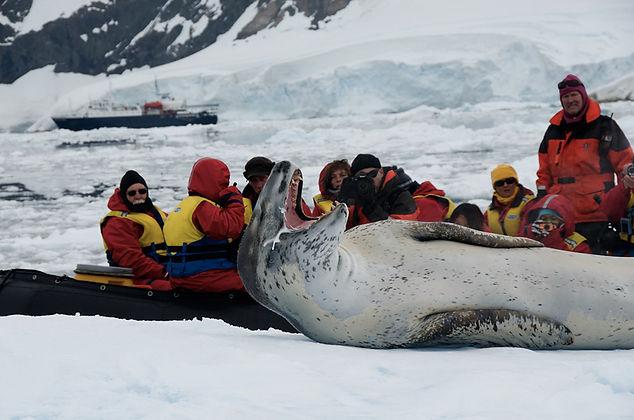 Leopard Seal. Antarctica wildlife photography cruise