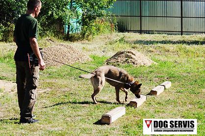 кинологическая служба, кинолог, собаки по поиску взрывчатых веществ, служебная собака, соревнования по поиску взрывчаых вществ