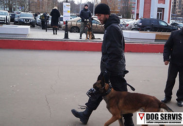 Дог сервис, подготовка соакпо поиску вв, МРС, подготова собак по поиску НВ