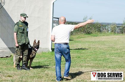 кинологическая служба, кинолог, собаки по поиску взрывчатых веществ, служебная собака, подготовка кинологов
