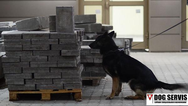 Тренировка собак по поиску вв, тренировка собак по поиску взрывчых веществ, дог сервис, кинологический центр, подготовка собак по поиску вв, дрессировка собак