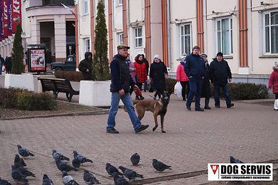 DOG SERVIS, дог сервис, подготовка собак по поису вв, МРС, подготовка служебных собак