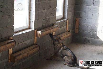 дог сервис, dog servis, тренировка собак по поиску взрывчатых веществ, тренировка собак по поиску вв, кинологический центр, собаки по поиску вв, собаки по поиску сву