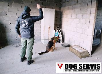 кинологический центр, дрессировка собак, собаки по поиску взрывчатых веществ, минно-розыскная служба, кинолог с собакой