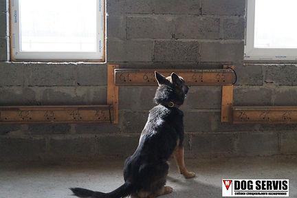 дог сервис, dog servis, тренировка собак, тренировка собак по поиску вв, тренировка собак по поиску взрывчатых веществ, кинологический центр Москва и область