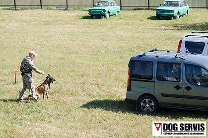 кинологическая служба, кинолог, собаки по поиску взрывчатых веществ, служебная собака, соревнования по поиску взрывчаых веществ