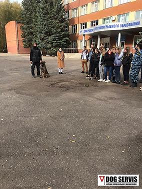 кинологический центр, занятия по поиску вв, тренировка по поиску вв, дог сервис, dog servis