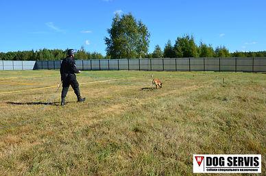 дресировка собак подготовка собак по поиску взрычатых веществ ВВ подготовка собак по минно-розысной службе МРС