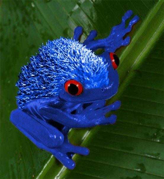 Hedgefrog