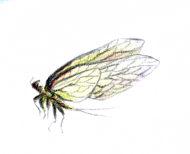 insecte 2 .png