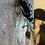 Thumbnail: Raccoon skull