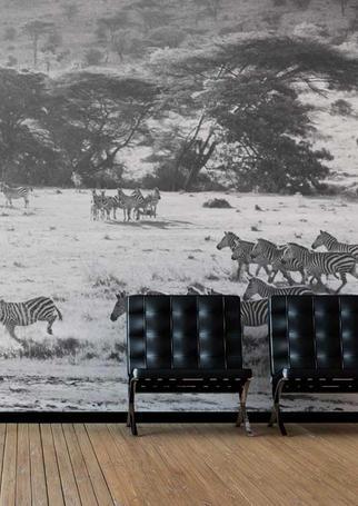 Title: Kamera Zebra